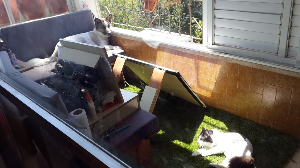Solar panel DIY with cat and dog
